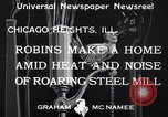 Image of Robin's nest Chicago Heights Illinois USA, 1933, second 7 stock footage video 65675037114