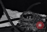 Image of Robin's nest Chicago Heights Illinois USA, 1933, second 11 stock footage video 65675037114