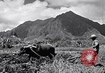Image of plowing a field with water buffalo Honolulu Hawaii USA, 1942, second 1 stock footage video 65675037119