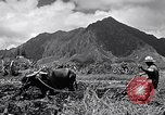 Image of plowing a field with water buffalo Honolulu Hawaii USA, 1942, second 2 stock footage video 65675037119