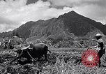 Image of plowing a field with water buffalo Honolulu Hawaii USA, 1942, second 3 stock footage video 65675037119