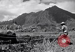 Image of plowing a field with water buffalo Honolulu Hawaii USA, 1942, second 9 stock footage video 65675037119