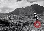 Image of plowing a field with water buffalo Honolulu Hawaii USA, 1942, second 11 stock footage video 65675037119