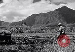 Image of plowing a field with water buffalo Honolulu Hawaii USA, 1942, second 12 stock footage video 65675037119