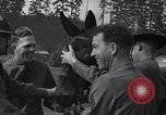 Image of war training to mules Fort Lewis Washington USA, 1940, second 4 stock footage video 65675037160