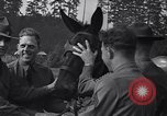 Image of war training to mules Fort Lewis Washington USA, 1940, second 5 stock footage video 65675037160