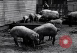 Image of Displaced Prisoners' Camp Eschwege Germany, 1946, second 11 stock footage video 65675037202