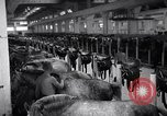 Image of stable of horses Italy, 1938, second 1 stock footage video 65675037222