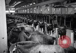 Image of stable of horses Italy, 1938, second 2 stock footage video 65675037222