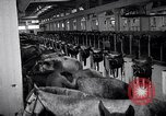 Image of stable of horses Italy, 1938, second 5 stock footage video 65675037222