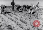 Image of Allied prisoners work at Japanese prison camp Pacific theater, 1941, second 9 stock footage video 65675037309
