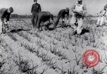 Image of Allied prisoners work at Japanese prison camp Pacific theater, 1941, second 11 stock footage video 65675037309