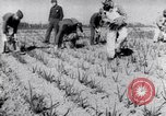 Image of Allied prisoners work at Japanese prison camp Pacific theater, 1941, second 12 stock footage video 65675037309