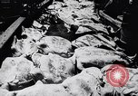 Image of turtles Florida United States USA, 1951, second 9 stock footage video 65675037431