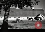 Image of horses United States USA, 1945, second 8 stock footage video 65675037434