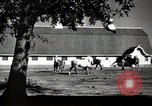 Image of horses United States USA, 1945, second 9 stock footage video 65675037434