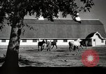 Image of horses United States USA, 1945, second 11 stock footage video 65675037434