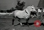 Image of horses United States USA, 1945, second 12 stock footage video 65675037434