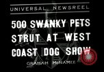 Image of annual dog show Santa Cruz California USA, 1936, second 1 stock footage video 65675037654