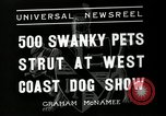 Image of annual dog show Santa Cruz California USA, 1936, second 4 stock footage video 65675037654