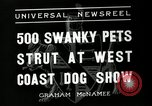 Image of annual dog show Santa Cruz California USA, 1936, second 9 stock footage video 65675037654