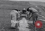 Image of pineapple plantation Puerto Rico, 1948, second 1 stock footage video 65675037844