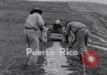 Image of pineapple plantation Puerto Rico, 1948, second 2 stock footage video 65675037844