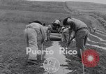 Image of pineapple plantation Puerto Rico, 1948, second 3 stock footage video 65675037844