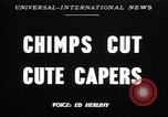 Image of chimpanzees Saint Louis Missouri USA, 1949, second 1 stock footage video 65675037932