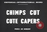 Image of chimpanzees Saint Louis Missouri USA, 1949, second 2 stock footage video 65675037932