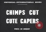 Image of chimpanzees Saint Louis Missouri USA, 1949, second 3 stock footage video 65675037932