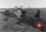 Image of farmer Egypt, 1945, second 6 stock footage video 65675038043