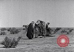 Image of Bedouins Sinai Peninsula, 1945, second 9 stock footage video 65675038045