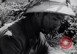 Image of North Vietnamese Vietcong soldiers at war Vietnam, 1966, second 10 stock footage video 65675038098