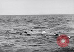 Image of Allied troops France, 1944, second 10 stock footage video 65675038173