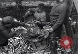Image of Herring fish United Kingdom, 1934, second 4 stock footage video 65675038343