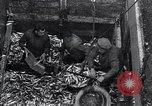 Image of Herring fish United Kingdom, 1934, second 11 stock footage video 65675038343