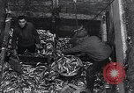 Image of Herring fish United Kingdom, 1934, second 12 stock footage video 65675038343