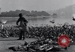 Image of honker ducks Oakland California USA, 1931, second 4 stock footage video 65675038349