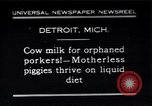 Image of porkers Detroit Michigan USA, 1931, second 1 stock footage video 65675038352