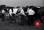 Image of polo match Sands Point New York USA, 1937, second 12 stock footage video 65675038362
