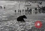 Image of elephant Atlantic City New Jersey USA, 1937, second 10 stock footage video 65675038442