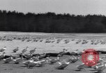 Image of swarm of ducks Uzbekistan Soviet Union, 1949, second 6 stock footage video 65675038603