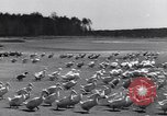 Image of swarm of ducks Uzbekistan Soviet Union, 1949, second 10 stock footage video 65675038603