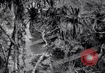 Image of American soldiers Oahu Hawaii USA, 1945, second 1 stock footage video 65675038645