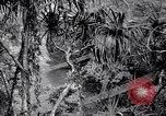 Image of American soldiers Oahu Hawaii USA, 1945, second 2 stock footage video 65675038645