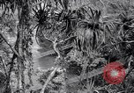 Image of American soldiers Oahu Hawaii USA, 1945, second 4 stock footage video 65675038645