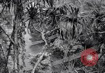 Image of American soldiers Oahu Hawaii USA, 1945, second 8 stock footage video 65675038645