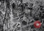 Image of American soldiers Oahu Hawaii USA, 1945, second 10 stock footage video 65675038645