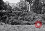 Image of jungle warfare training Canungra Australia, 1943, second 1 stock footage video 65675038652